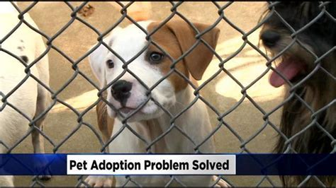 sacramento pound sacramento spca helping spay and neuter pets adopted from city s shelter 171 cbs