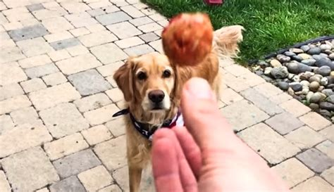 can t catch food viral just can t catch food in motion iheartdogs