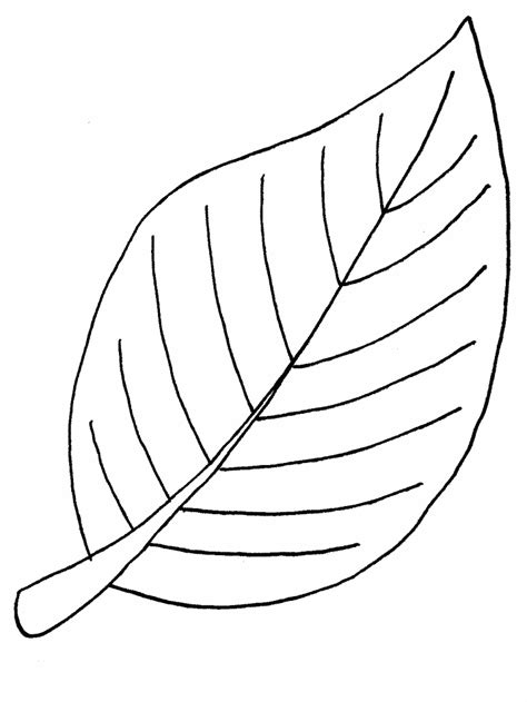 apple leaf coloring page apple leaf template clipart best