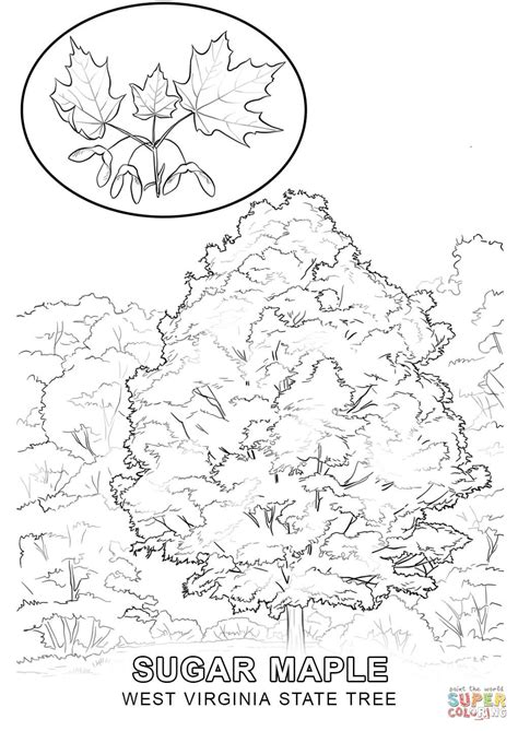 printable coloring pages virina virginia state tree coloring page pages grig3 org