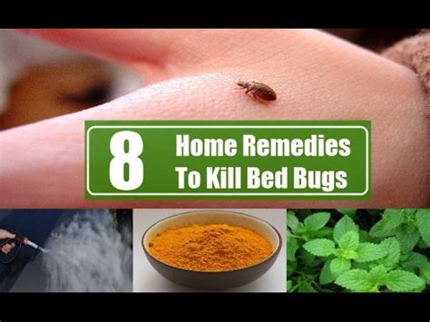 can lysol kill bed bugs how to get rid of bed bugs fast product info a natural