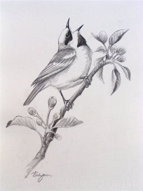 12 best images about sketches of birds on pinterest