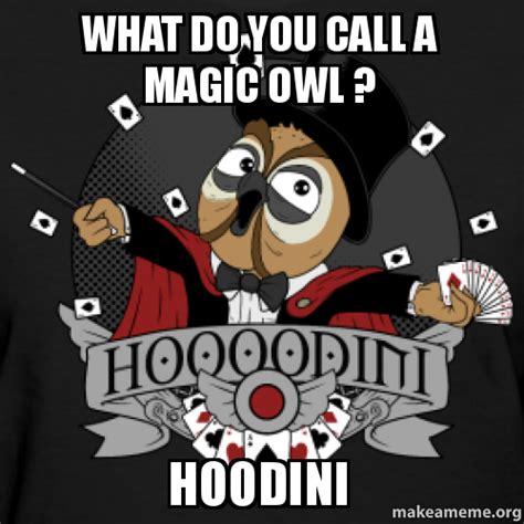 What Do Meme - what do you call a magic owl hoodini make a meme
