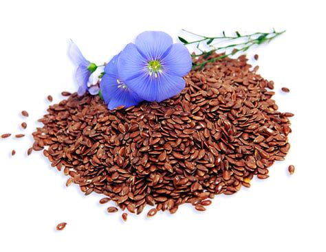 flaxseed for dogs nz provida nz health supplements for dogs cats horses