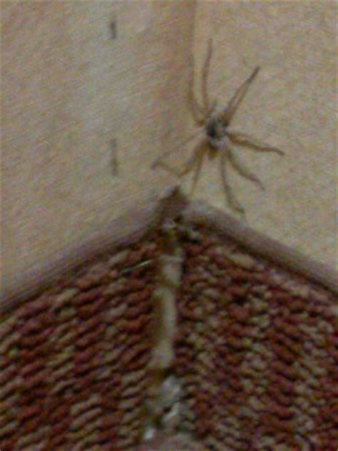 spider in bed roach i stepped on in my room picture of whiskey pete s