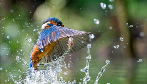 beautiful birds phots beautiful birds photography 20 photos of birds taken at amazing places