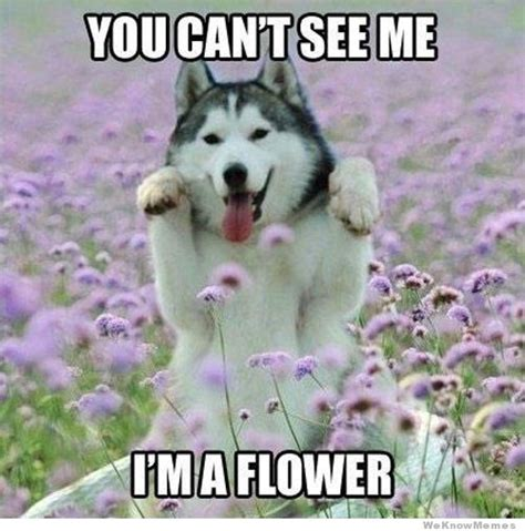 Flower Meme - you can t see me i m a flower weknowmemes