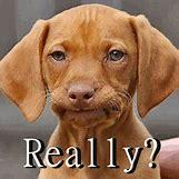 Funny Animal Workout Meme   458 x 457 animatedgif 1475kB