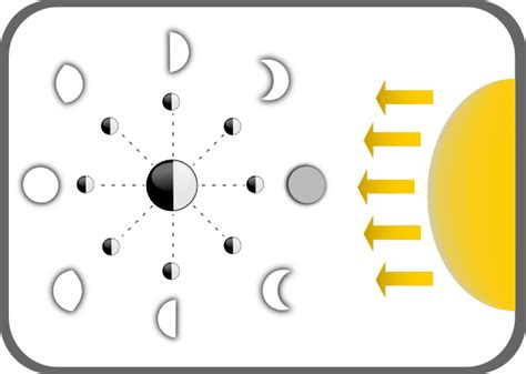 phases of the moon diagram to label diagram of moon phases clip at clker vector clip