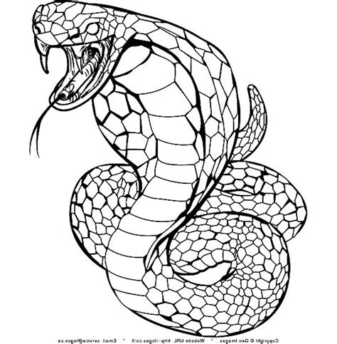 king cobra coloring page snap cara org