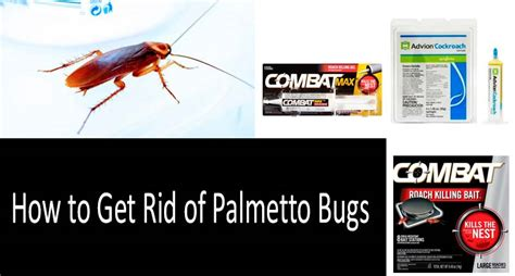 how to get rid of bathroom bugs palmetto bug vs cockroach what s the difference