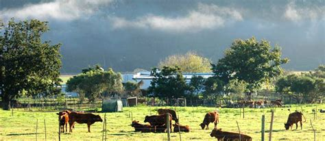 lismore cottages businesses in garden route info