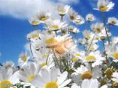 m innamoro davvero testo fabio concato fiore di maggio doovi