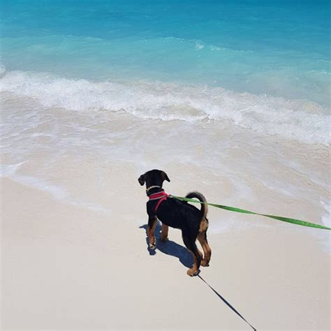 places where you can play with puppies there s an island where you can play with rescue puppies and i need to go there asap