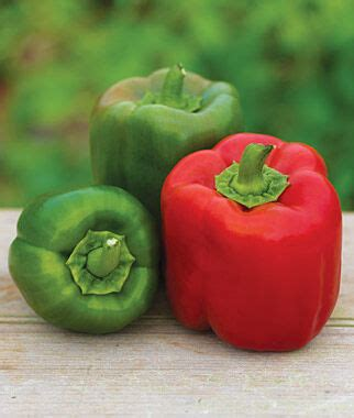 sweet candy apple hybrid pepper seeds vegetable seeds