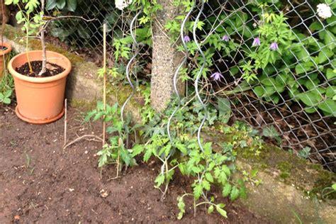 Wie Pflege Ich Tomatenpflanzen 5105 by Tomaten Pflanzen Tipps Zum Setzen Pflegen Schneiden