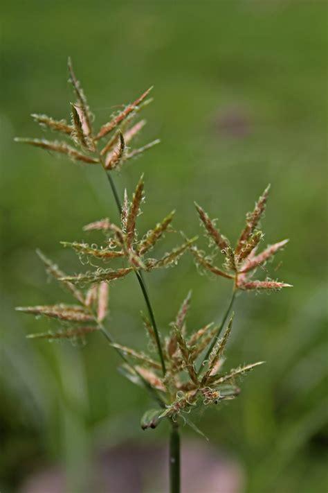 common zone  weeds tips  eradicating weeds  zone
