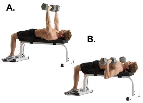 pin bench chest press dumbbell incline on pinterest