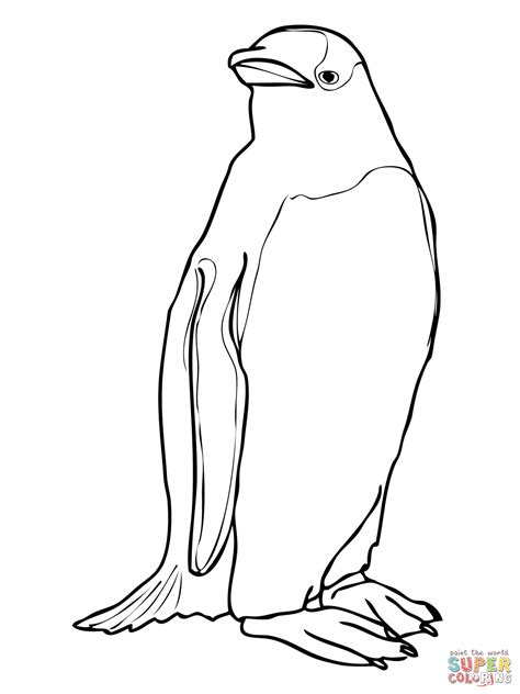galapagos penguin coloring page gentoo penguin coloring page free printable coloring pages