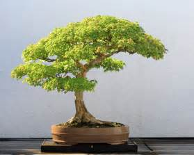 Artificial Boxwood Garland Trident Maple Bonsai Leaves Trident Maple