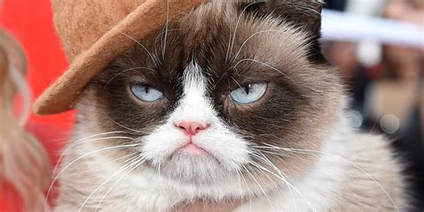 grumpy cat grumpy cat gets our vote for best dressed feline at the