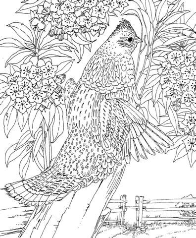 hard landscape coloring pages kolorowanka cieciornik i kalmia szerokolistna symbole