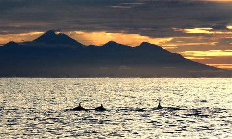Bm Rinjani delfine vor bali in freier natur beobachten urlaub im