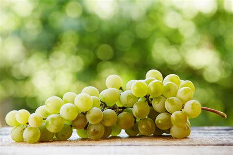 varieta uva da tavola uva da tavola le principali variet 224 dall italia alla