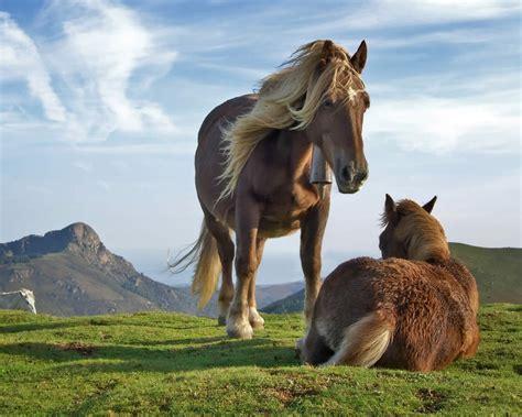 imagenes surrealistas de caballos todosobrelahipica fotos de caballos