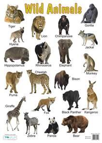 Large Jungle Wall Stickers jenifer leguizam 243 n cmap