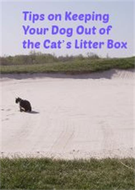 litter box to keep dogs out pin by prosense on healthy home
