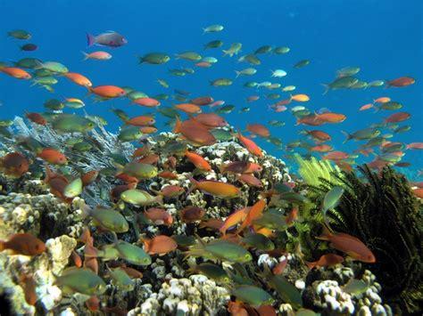 wallpaper keindahan alam bawah laut bersyukur yuk sama tuhan atas 10 keindahan alam indonesia