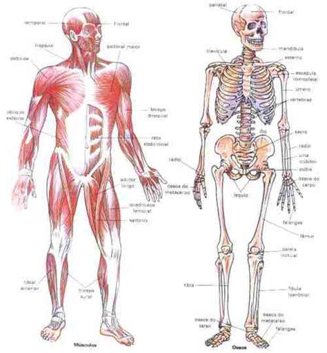 la anatomia humana davichito99