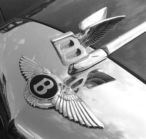 bentley wings by moirsypan on deviantart
