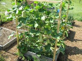 Vertical Gardening Containers - photo tour of small garden beds abundant mini gardens