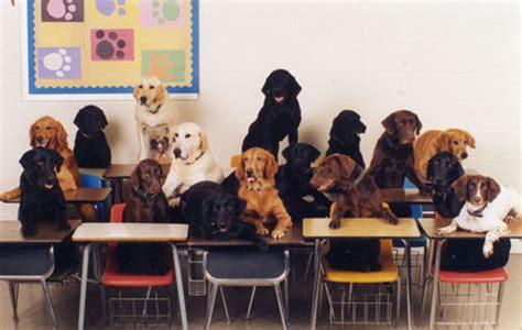 puppy school dogs go to school