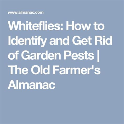 getting rid of garden pests 1000 ideas about whitefly on spider mites