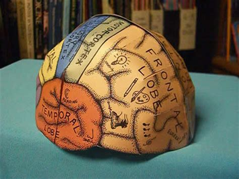 How To Make A Paper Brain - grows