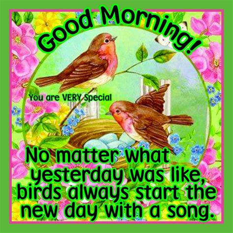 good morning no matter what good morning no matter what yesterday was like birds