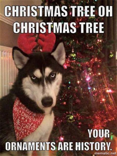 funny cute christmas dog pics