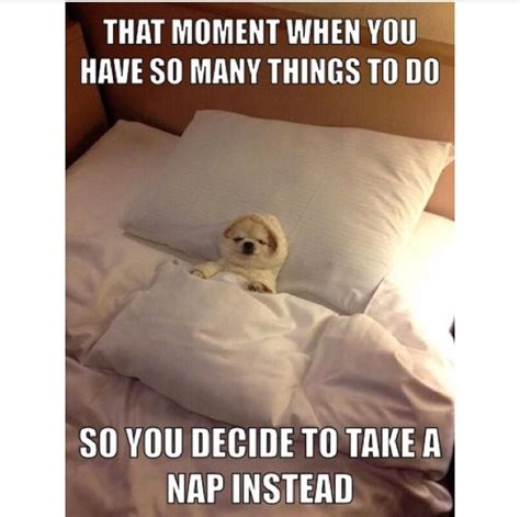 Nap Meme - best 25 take a nap ideas on pinterest i take a nap how