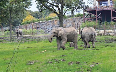 opel zoo georg opel freigehege f 252 r tierforschung