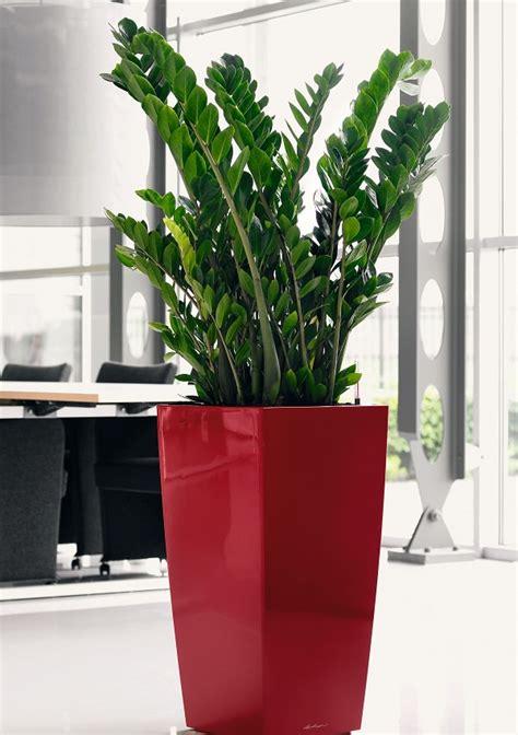 imagenes de plantas verdes de interior 19 plantas de interior sin mantenimiento