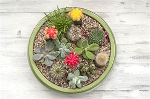 how to make a succulent container garden a succulent plant container garden