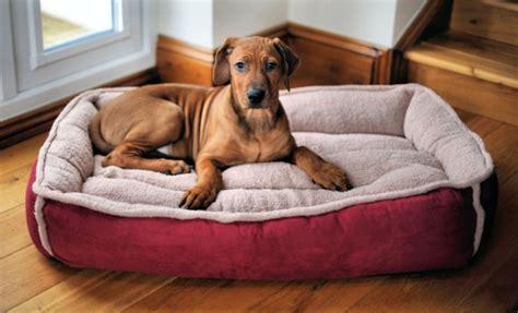 schöne hundebetten hundesofa 16 bequeme modelle f 252 r den besten hund
