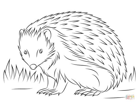 hedgehog coloring pages hedgehog free colouring pages