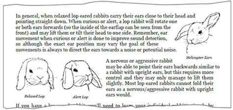 if you were my bunny a storyplay book books rabbit behaviour understanding your rabbit s habits