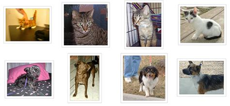 cats vs dogs io building powerful image classification models using data