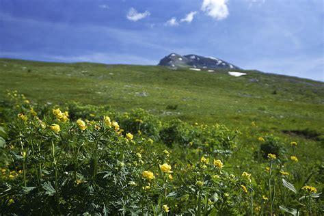 sentiero dei fiori orobie valle brembana un esplosione di colori sul sentiero dei