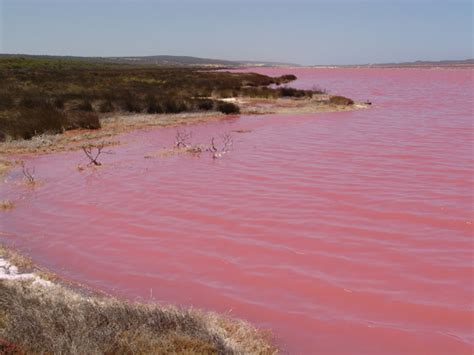 pink lake australia world visits pink lake in western australia